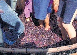 Vineyard-sula-300x213 dans Un peu de tourisme entre amis