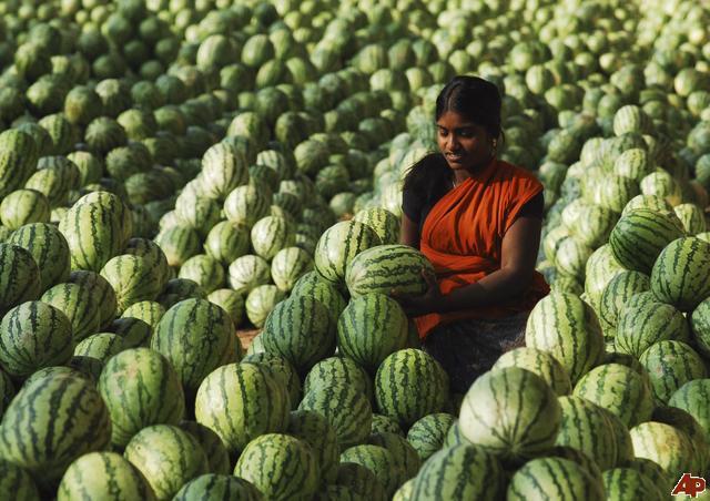 Wal-Mart est-il l'ami des fermiers indiens ? dans Je l'ai lu dans le journal! wholesaler-3
