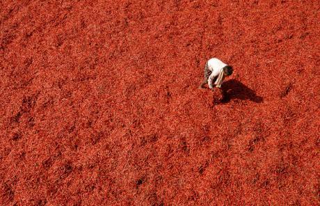 wholesaler-chilli-field_1373522c Economie dans Potin, potin, quand tu nous tiens!
